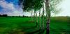 golf_048