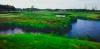 golf_051