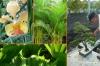 33-pflanzen-details