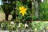 34-pflanzen-details2