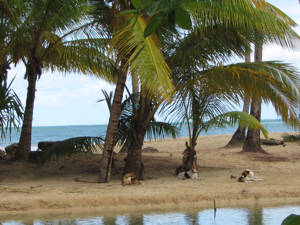 Auslauf Lagune Las ballenas