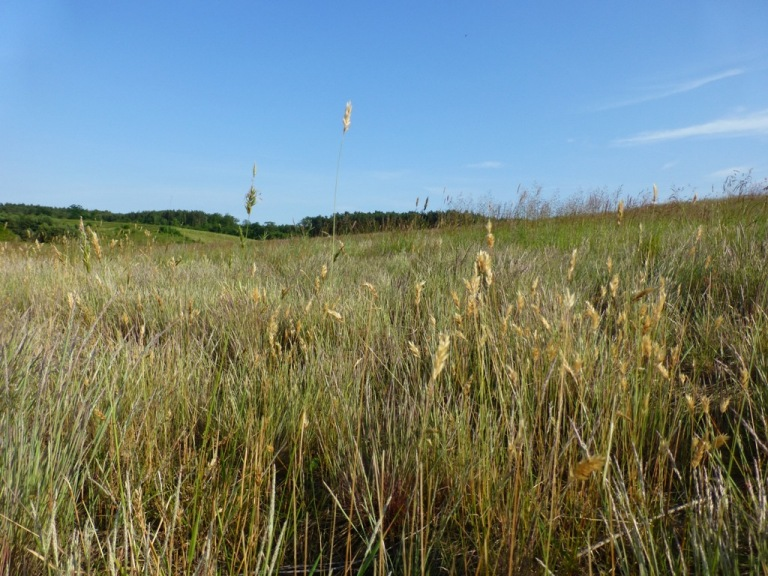 Przytok 2013 existing vegetation