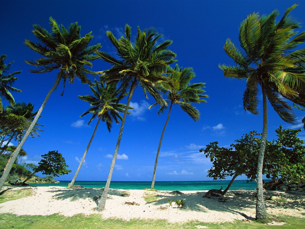 dominican republic beach palm trees